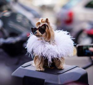 Le chien en guise d'accessoire, dernière tendance 2000s à faire son retour ?