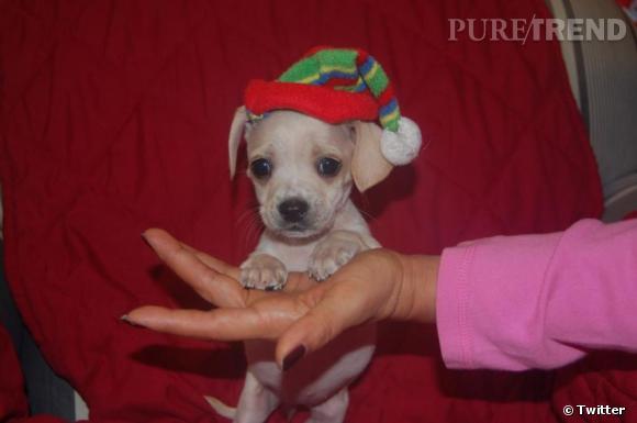 On ne peut pas s'en empêcher : voilà une autre photo du petit Bean !