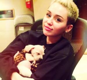 Miley Cyrus, Selena Gomez, Bar Refaeli : bonne humeur et bonne bouffe dans le best of Twitter
