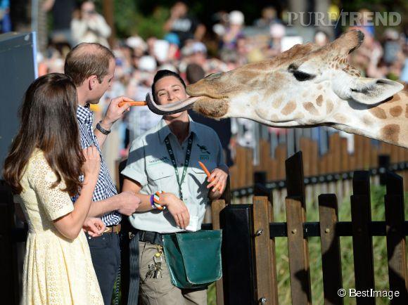 Kate Middleton, le prince William ont d'abord visité le zoo à deux, le dimanche 20 avril 2014 à Sydney.