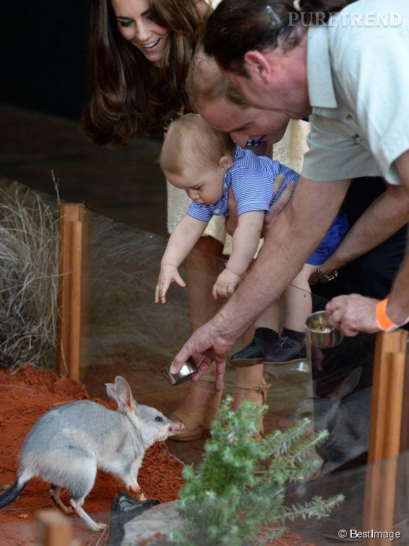 Kate Middleton et le prince William, duc et duchesse de Cambridge, ont ensuite fait découvrir le zoo de Taronga (Sydney) à leur fils Baby George, le 20 avril 2014.