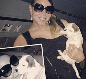 Mariah Carey dépense 28 000 dollars pour entretenir ses chiens