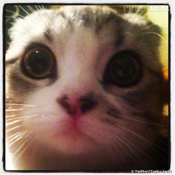 Meredith le chat de Taylor Swift.