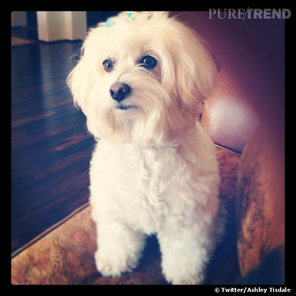 Ashley Tisdale visiblement fière de son mini chien tout beau tout propre.