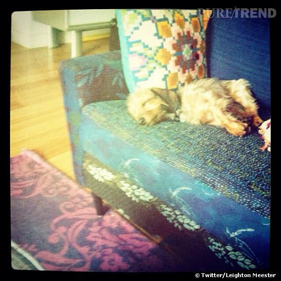 Leighton Meester ne lâche pas son chien d'une semelle, même quand il dort.
