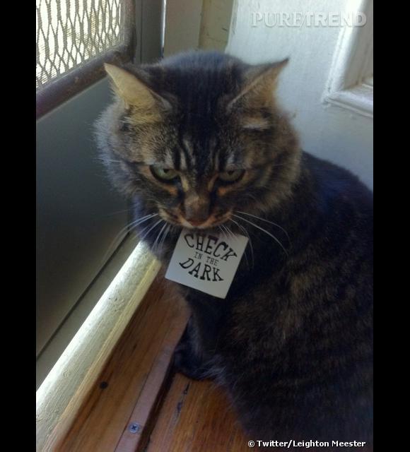 Le Mr Kitty de Leighton Meester.