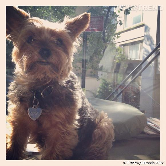 Le chien de Miranda Kerr.