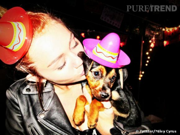 Miley adore déguiser ses chiens.