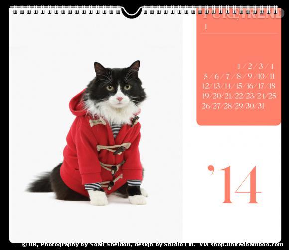 Le calendrier 2014 des chats fashion par United Bamboo.