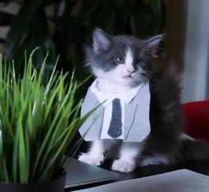 """""""50 Shades of Grey"""" : la purrrfect parodie avec des chatons qui secoue le Web"""